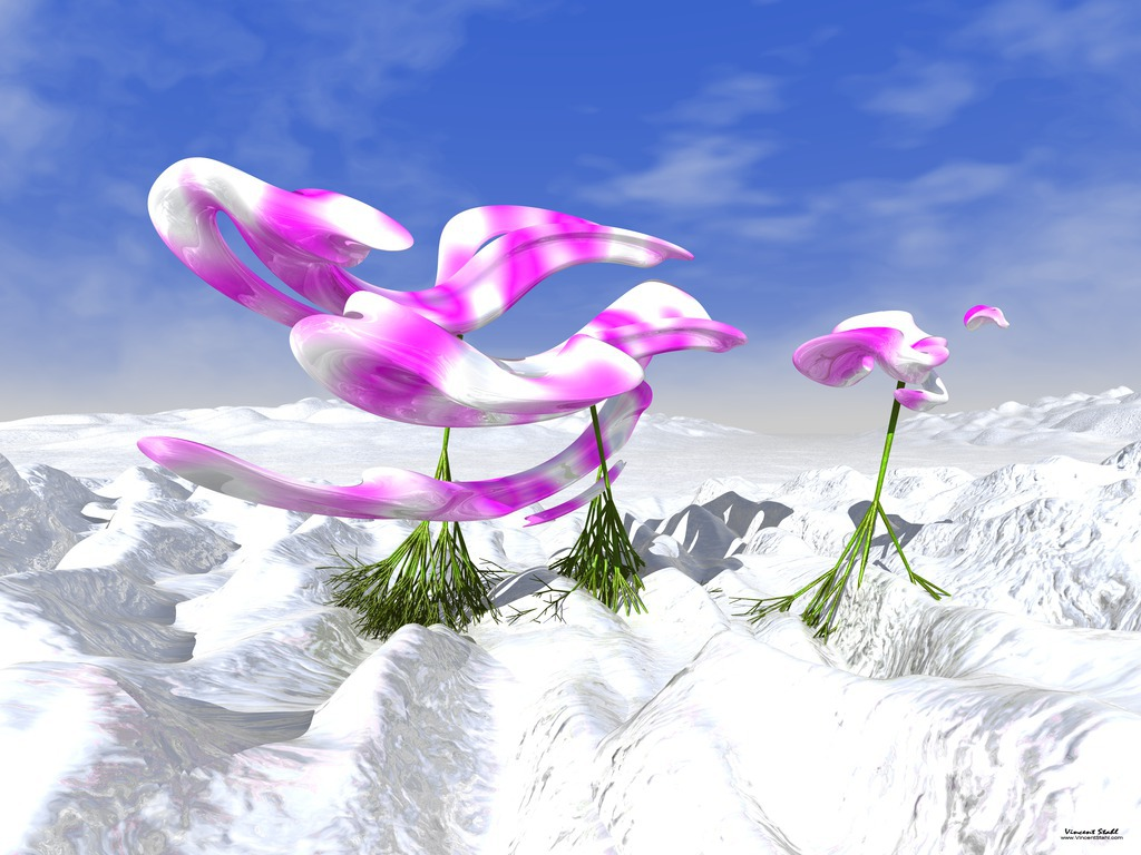 Orchids On Ice - Virtual photo