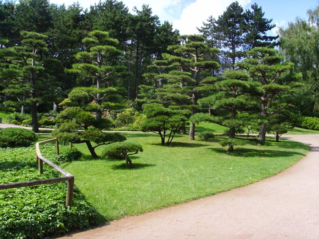 Japanese trees vincent stahl photo library for Japanese trees for landscaping