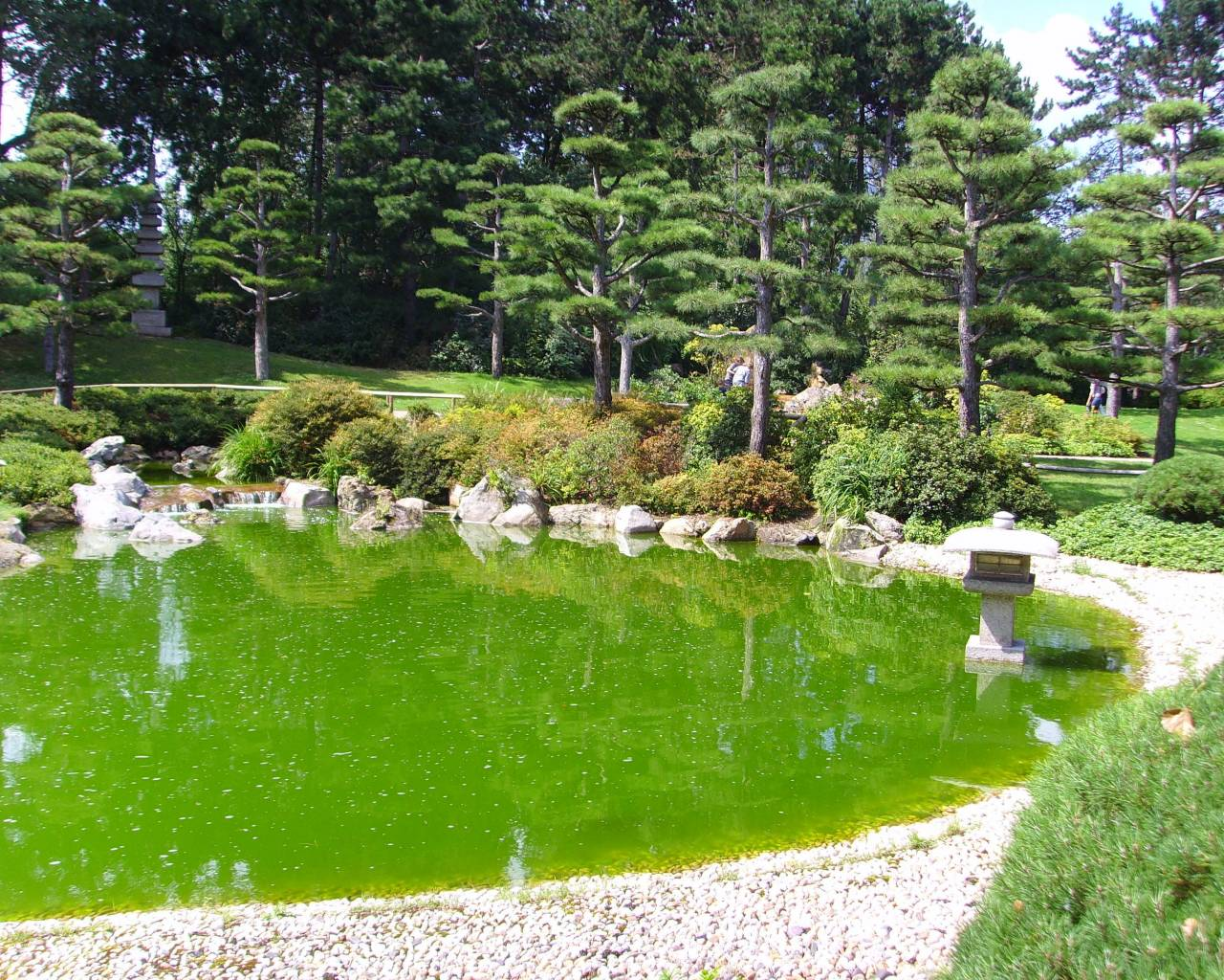 Japanese pond garden for Japanese pond garden