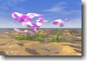 Pink Orchids photoprint